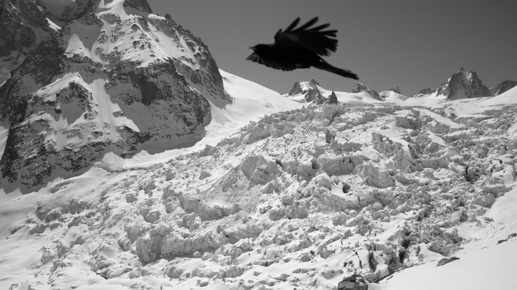 Raven high above the Vallee Blanche